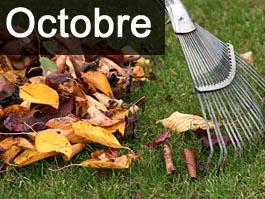 travaux-et-conseils-jardinage-en-octobre
